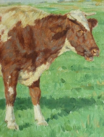 STUDY OF A COW - BELGIUM SCHOOL